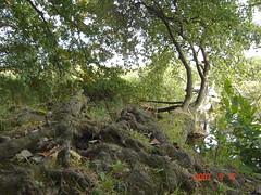 tree & water (toulouzdatbllues77) Tags: tree water aqua reflect arbre woda drzewo