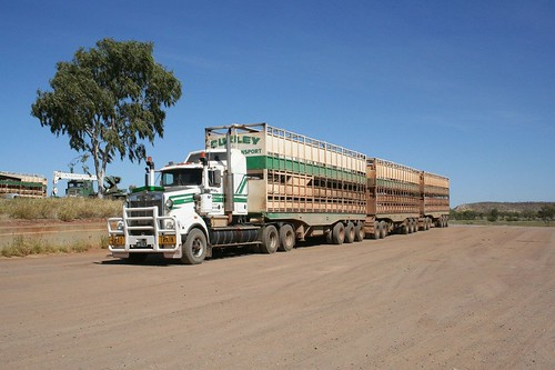 kenworth cattle truck