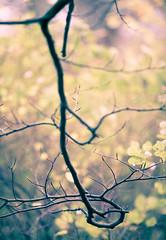 Branch (manuel ek) Tags: tree nature leaves leaf skne bush branch sweden natur sverige curl malm trd gren lv buske