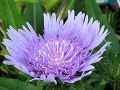 Bois de Vincennes + Parc Floral 21.09.09 053 (MUMU.09) Tags: flores flower de photo foto flor petal da  bild blume fiore  virg imagem  petalo  kwiat  flori ptalos  bltenblatt ptala                mumu09