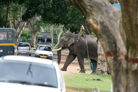 Jumbo Traffic Jam at Bandipur Forest Reception Area