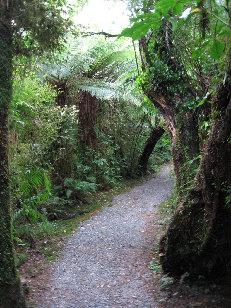 Rain forest 5