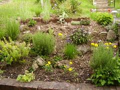 Herb garden June 2007