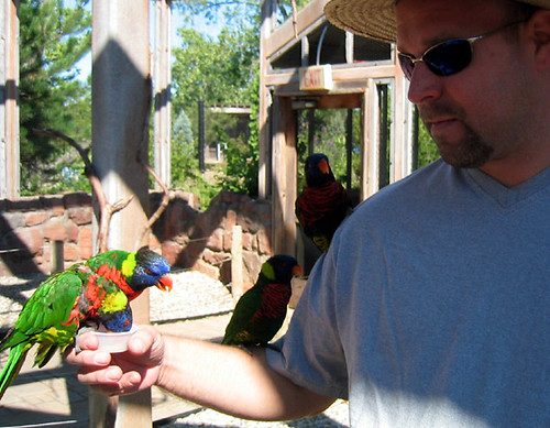 Jeff and the lorikeets