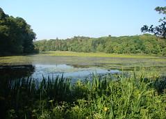 The Swan Pond (Mac ind g) Tags: scotland summer pond culzean culzeancastleandcountrypark reflection landscape nts swan waterfowl