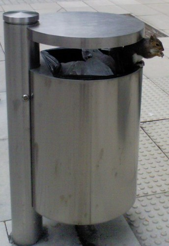 Squirrel in a bin