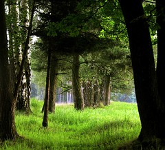 To the woods (Linda6769) Tags: tree green grass pine germany village meadow thuringia explore birch grn baum birke birchtree conifer nadelbaum konifere explored brden birkenbaum