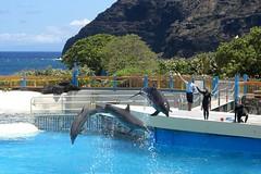 Three dolphins