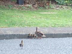 duck rescue 8