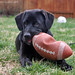 tenor-dog-football-toy