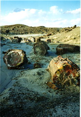 Petrified Forest (David J Chanter) Tags: arizona unitedstates holbrook petrifiedforest