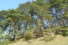 Bume am Hang (ThomasKohler) Tags: wood lake tree nature see natur teich baum mv mecklenburg feisneck seenplatte feisnecksee
