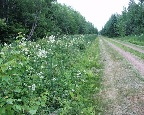 Cardigan to Georgetown and Montague on Confederation Trail by tlbcml.