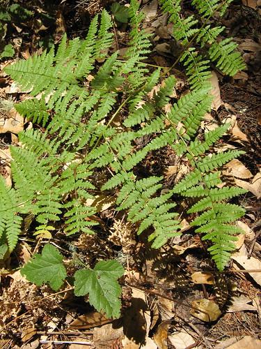 Nice ferns