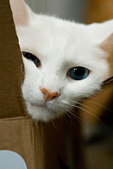 spycat revealed (lulu.photo) Tags: cat nikon box d200 soe whitecat luluphoto bestofcats misterpeaches boc1007