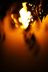 Fiery Shadow (Timothy Goh) Tags: light shadow tree leaves night canon fire l f2 135mm