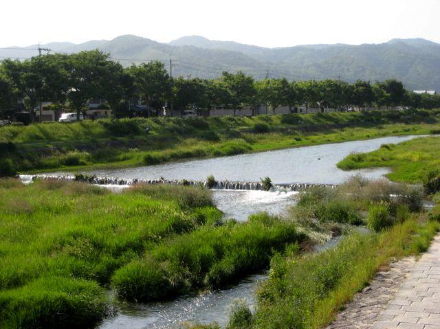 2007.5.27上賀茂 御薗橋より1