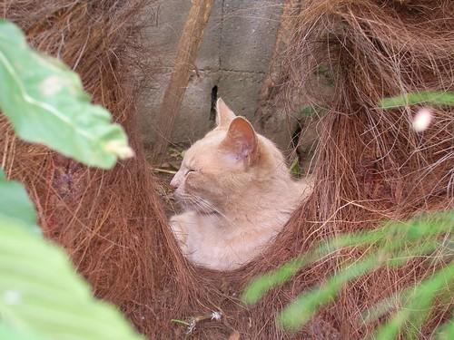 あたしにいるのはInner CAT
