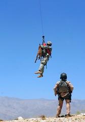 soldiers usarmy wwwarmymil militarydogmilitaryworkingdogcaninehoisttraininghelicopterafghanistanbagram