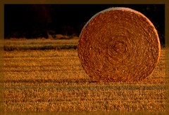 Golden Roll (Kirsten M Lentoft) Tags: sunset topf25 searchthebest straw roll hay bale naturesfinest 25faves anawesomeshot momse2600 infinestyle superhearts flickrelite natureoutpost kirstenmlentoft