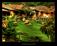 * Rural Landscape (*atrium09) Tags: travel green animals rural landscape bravo venezuela paisaje olympus merida zen soe hdr themoulinrouge photomatix magicdonkey atrium09 mywinners mywinner abigfave anawesomeshot superaplus aplusphoto 2007