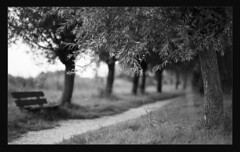 Tunnel o Trees (Edd Noble) Tags: trees bw amsterdam bench nikon bokeh path tunnel f100 delta100 nikkor ilford 85mmf14d epsonv700