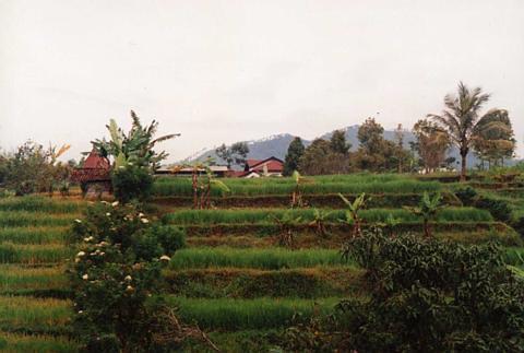 view from the villa ... Batu