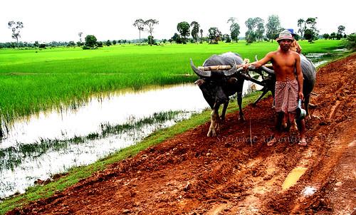 a farmer's hard life