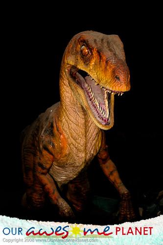 Dino's Alive-39