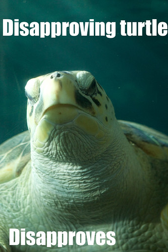 Disapproving turtle
