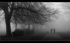 things to come.... (Digital Diary........) Tags: trees blackandwhite mist cold chrisconway dogwalkers winterscoming