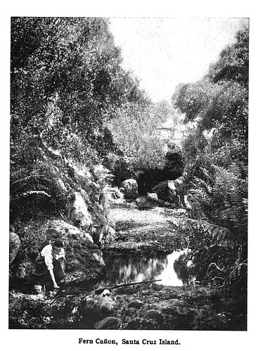 Fern Canyon Santa Cruz Island 1906