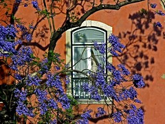 Jacaranda through my window (Z Eduardo...) Tags: city house flower home portugal window lisboa lisbon santacatarina jacarand peopleschoice explorefrontpage favoritegarden diamondclassphotographer superhearts