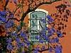 Jacaranda through my window (Zé Eduardo...) Tags: city house flower home portugal window lisboa lisbon santacatarina jacarandá peopleschoice explorefrontpage favoritegarden diamondclassphotographer superhearts