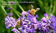 !!!! (AndreaKamal.com) Tags: macro nature bee honeybee naturesfinest supershot flickrsbest specnature impressedbeauty aplusphoto isawyoufirst excellentphotographerawards flickrelite beedieoff httpwwwandreakamalde
