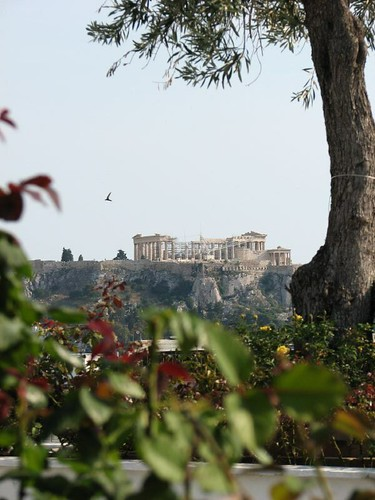 244 Acropolis with olive tree
