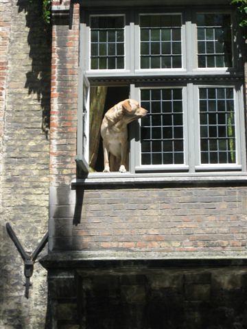 An authentic Brugge dog!  ha ha
