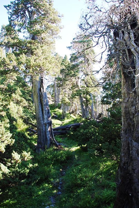 雪北山屋前的森林