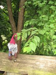 Gnorm checks out Rock Creek Park