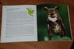 bird book 003