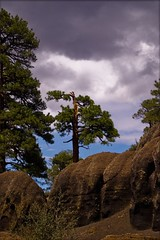 stormtree (ScarletFaerie (K. Wood Photography)) Tags: trees arizona sky storm tree clouds rocks desert hike geology