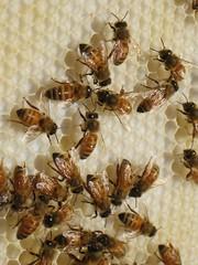 Beekeeping 2458