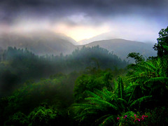 Rain on the Rain Forest (Rick Elkins) Tags: mist rain bravo searchthebest bluemountains jamaica tropical naturesfinest bananatrees magicdonkey cfg mywinners flickrgold the25magicdonkeysolution aplusphoto superbmasterpiece goldenphotographer diamondclassphotographer theperfectphotographer rickelkins