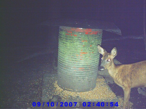 au piège photo près d'un agrénoir