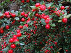 Kubota Gardens, Seattle (shawnmebo) Tags: seattle kubotagardens seattleflickrmeetup