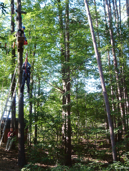 High rope challenge 025