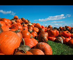 Happy October ! (Julien Robitaille Photographie) Tags: bravo pumpkins pumpkincarving charlevoix octobre stlawrenceriver citrouille naturesfinest supershot magicdonkey happyoctober anawesomeshot superbmasterpiece theperfectphotographer halloweenseason icecanoeracing julienrobitaille ilseauxcoudres