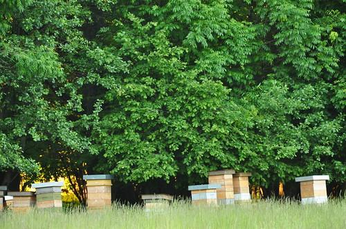 more swedish beehives