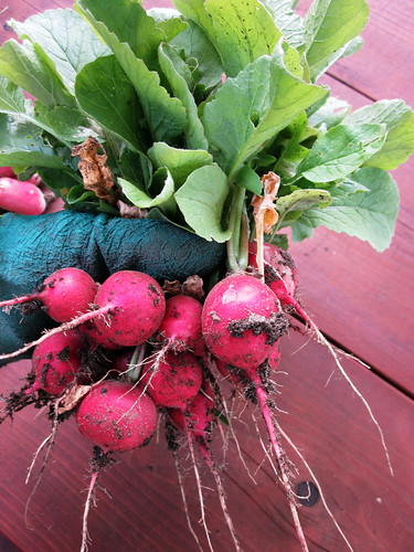 Yay for Radishes!!!