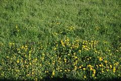 More flowers (carterjmelissa) Tags: horses switzerland stealing